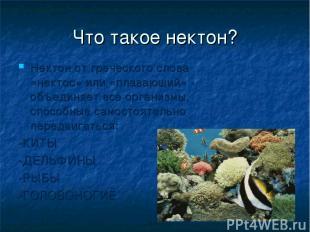Что такое нектон? Нектон от греческого слова «нектос» или «плавающий» - объединя