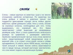 Слоны - самые крупные из животных суши и во многих отношениях наиболее интересны