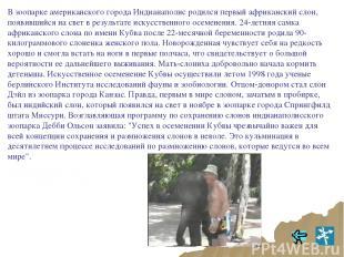 В зоопарке американского города Индианаполис родился первый африканский слон, по