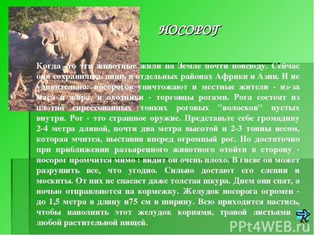 Когда -то эти животные жили на Земле почти повсюду. Сейчас они сохранились лишь в отдельных районах Африки и Азии. И не удивительно: носорогов уничтожают и местные жители - из-за мяса и жира, и охотники - торговцы рогами. Рога состоят из плотно спре…