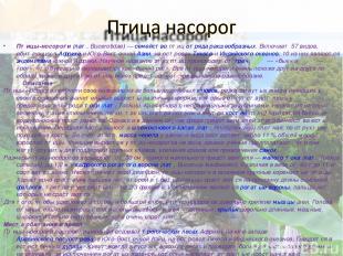 Пти цы-носоро ги (лат.Bucerotidae)— семейство птиц отряда ракшеобразных. Включ