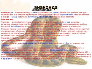 Анако нда (лат.Eunectes murinus)— змея из подсемейства удавов (Boidae). В стар