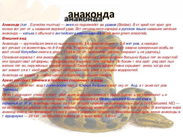 Анако нда (лат.Eunectes murinus)— змея из подсемейства удавов (Boidae). В старой литературе можно встретить название водяной удав. Встречающееся изредка в русском языке название зелёная анаконда— калька с обычного английского наименования этой зм…