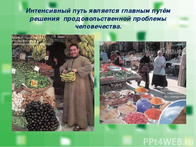 Интенсивный путь является главным путём решения продовольственной проблемы человечества.