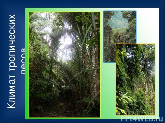 Климат тропических лесов