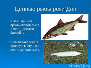 Ценные рыбы реки Дон Рыбец ценная промысловая рыба Азово-Донского бассейна. Шема