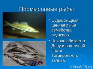 Промысловые рыбы Судак хищная ценная рыба семейства окуневых. Чехонь обитает в Д