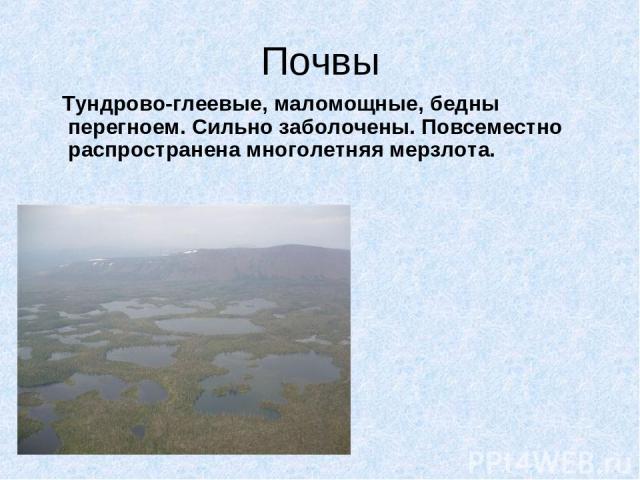 Почвы Тундрово-глеевые, маломощные, бедны перегноем. Сильно заболочены. Повсеместно распространена многолетняя мерзлота.