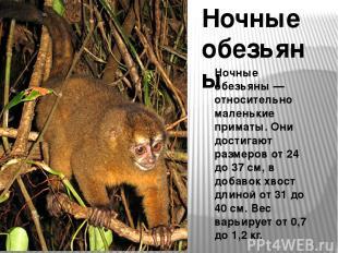 Ночные обезьяны Ночные обезьяны — относительно маленькие приматы. Они достигают