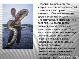 Чудовищные размеры (до 10 метров) анаконды позволяют ей охотиться и на крупных ж