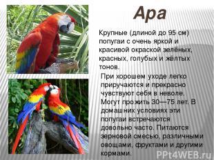 Ара Крупные (длиной до 95 см) попугаи с очень яркой и красивой окраской зелёных,