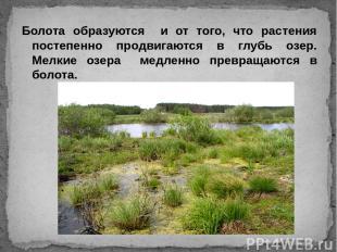 Болота образуются и от того, что растения постепенно продвигаются в глубь озер.