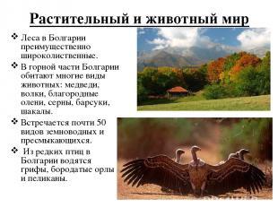 Растительный и животный мир Леса в Болгарии преимущественно широколиственные. В