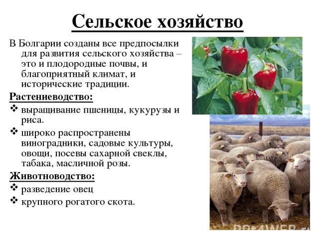 Сельское хозяйство В Болгарии созданы все предпосылки для развития сельского хозяйства – это и плодородные почвы, и благоприятный климат,и исторические традиции. Растениеводство: выращивание пшеницы, кукурузы и риса. широко распространены виноградн…