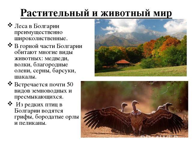 Растительный и животный мир Леса в Болгарии преимущественно широколиственные. В горной части Болгарии обитают многие виды животных: медведи, волки, благородные олени, серны, барсуки, шакалы. Встречается почти 50 видов земноводных и пресмыкающихся. И…