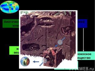 2в. Состав биосферы биотический = живой компонент абиотический = неживой компоне