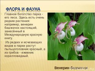 Главное богатство парка - его леса. Здесь есть очень редкие растения: например,
