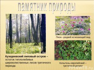 Кузедеевский липовый остров – остаток теплолюбивых широколиственных лесов третич