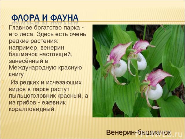 Главное богатство парка - его леса. Здесь есть очень редкие растения: например, венерин башмачок настоящий, занесённый в Международную красную книгу. Из редких и исчезающих видов в парке растут пыльцоголовник красный, а из грибов - ежевник кораллови…