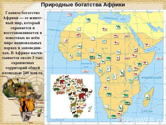 Природные богатства Африки Главное богатство Африки — ее живот-ный мир, который охраняется и восстанавливается в известных во всём мире национальных парках и заповедни-ках. В Африке насчи-тывается около 3 тыс. охраняемых территорий общей площадью 24…