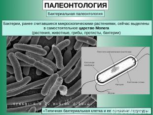 ПАЛЕОНТОЛОГИЯ Бактериальная палеонтология Бактерии, ранее считавшиеся микроскопи