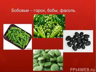 Бобовые – горох, бобы, фасоль.