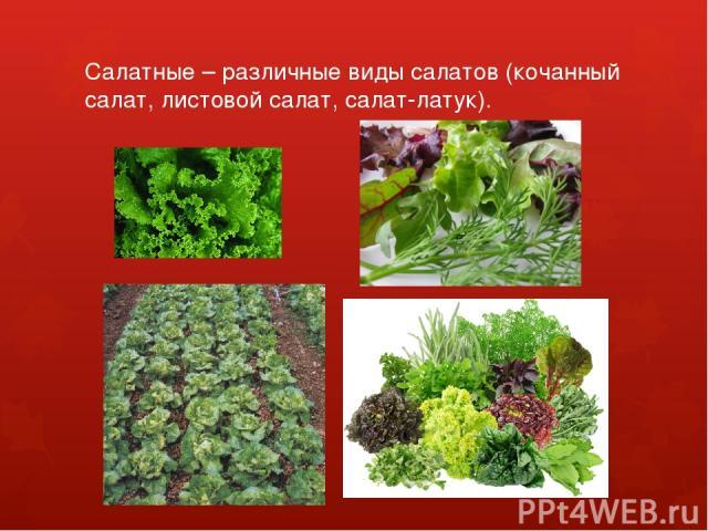 Салатные – различные виды салатов (кочанный салат, листовой салат, салат-латук).