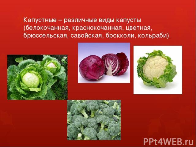 Капустные – различные виды капусты (белокочанная, краснокочанная, цветная, брюссельская, савойская, брокколи, кольраби).