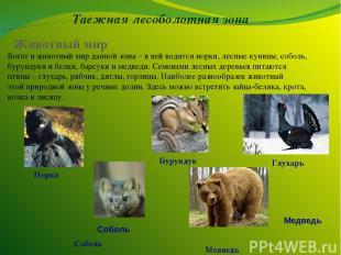Таежная лесоболотная зона Животный мир Богат и животный мир данной зоны – в ней