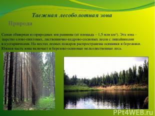 Таежная лесоболотная зона Самая обширная из природных зон равнины (её площадь –