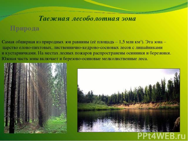 Таежная лесоболотная зона Самая обширная из природных зон равнины (её площадь – 1,5 млн км2). Эта зона – царство елово-пихтовых, лиственнично-кедрово-сосновых лесов с лишайниками и кустарничками. На местах лесных пожаров распространены осинники и бе…