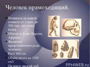 Человек прямоходящий. Появился на нашей планете от 1 млн. до 300 тыс. лет тому н