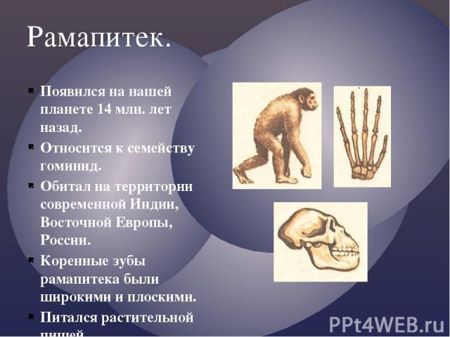 Рамапитек. Появился на нашей планете 14 млн. лет назад. Относится к семейству гоминид. Обитал на территории современной Индии, Восточной Европы, России. Коренные зубы рамапитека были широкими и плоскими. Питался растительной пищей.