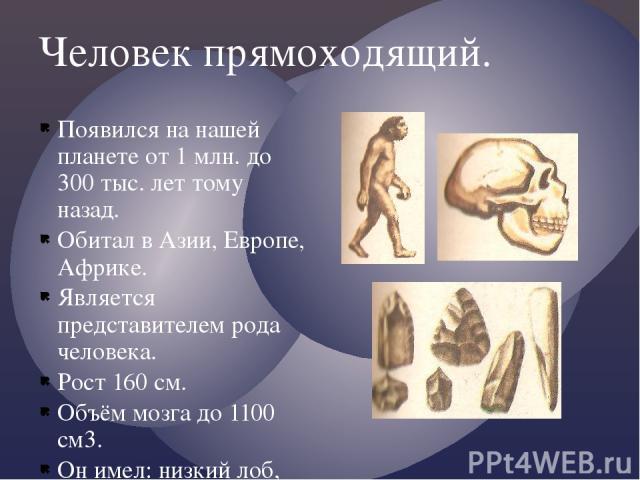 Человек прямоходящий. Появился на нашей планете от 1 млн. до 300 тыс. лет тому назад. Обитал в Азии, Европе, Африке. Является представителем рода человека. Рост 160 см. Объём мозга до 1100 см3. Он имел: низкий лоб, мощные над бровные дуги, массивная…