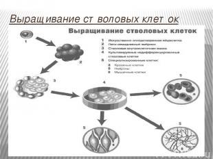 Выращивание стволовых клеток