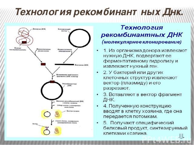 Технология рекомбинантных Днк.