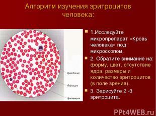 Алгоритм изучения эритроцитов человека: 1.Исследуйте микропрепарат «Кровь челове