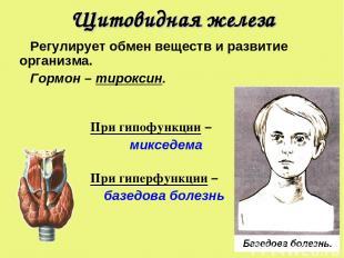 Щитовидная железа Регулирует обмен веществ и развитие организма. Гормон – тирокс