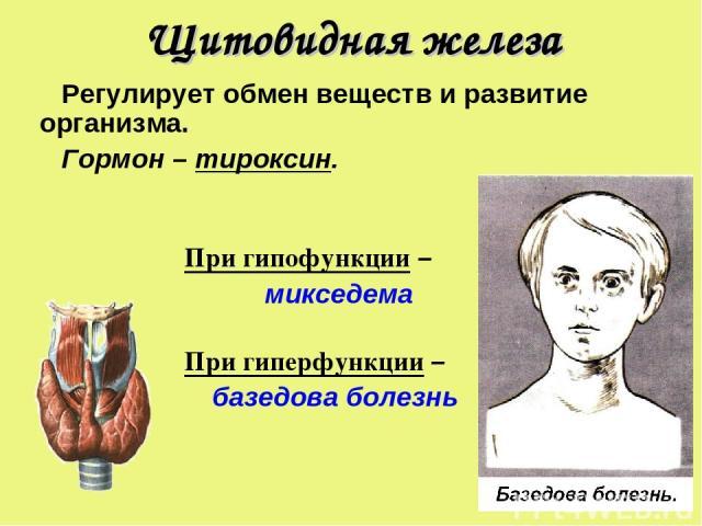 Щитовидная железа Регулирует обмен веществ и развитие организма. Гормон – тироксин. При гипофункции – микседема При гиперфункции – базедова болезнь