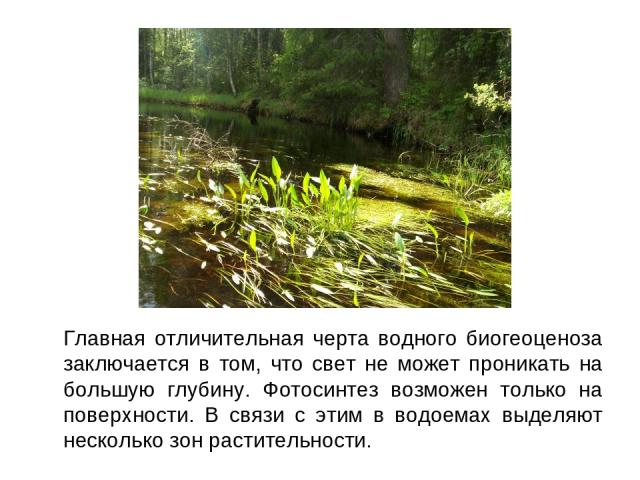 Главная отличительная черта водного биогеоценоза заключается в том, что свет не может проникать на большую глубину. Фотосинтез возможен только на поверхности. В связи с этим в водоемах выделяют несколько зон растительности.