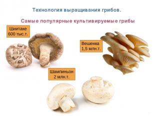 * Технология выращивания грибов. Самые популярные культивируемые грибы Вешенка 1