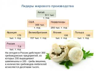 * Лидеры мирового производства На сегодня в России действуют 300 грибоводческих
