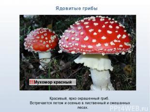 * Ядовитые грибы !!! Красивый, ярко окрашенный гриб. Встречается летом и осенью