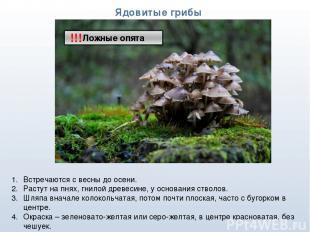 * Ядовитые грибы !!! Встречаются с весны до осени. Растут на пнях, гнилой древес