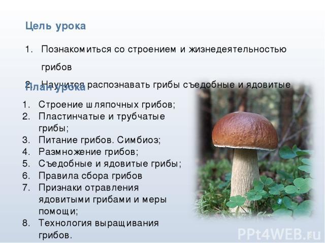* Познакомиться со строением и жизнедеятельностью грибов Научится распознавать грибы съедобные и ядовитые Цель урока План урока Строение шляпочных грибов; Пластинчатые и трубчатые грибы; Питание грибов. Симбиоз; Размножение грибов; Съедобные и ядови…