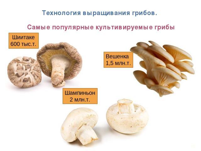 * Технология выращивания грибов. Самые популярные культивируемые грибы Вешенка 1,5 млн.т. Шампиньон 2 млн.т. Шиитаке 600 тыс.т.
