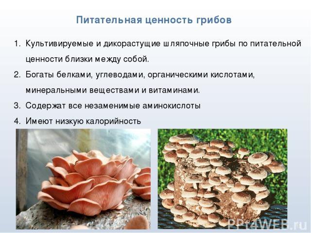 * Питательная ценность грибов Культивируемые и дикорастущие шляпочные грибы по питательной ценности близки между собой. Богаты белками, углеводами, органическими кислотами, минеральными веществами и витаминами. Содержат все незаменимые аминокислоты …