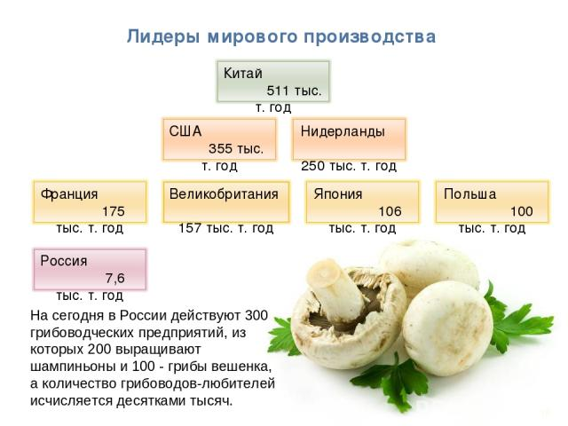 * Лидеры мирового производства На сегодня в России действуют 300 грибоводческих предприятий, из которых 200 выращивают шампиньоны и 100 - грибы вешенка, а количество грибоводов-любителей исчисляется десятками тысяч..