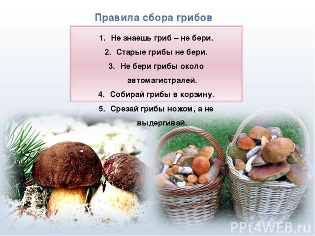* Правила сбора грибов