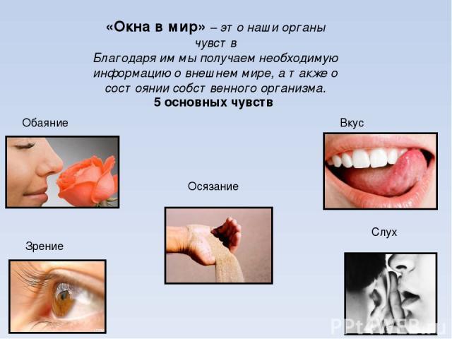 «Окна в мир» – это наши органы чувств Благодаря им мы получаем необходимую информацию о внешнем мире, а также о состоянии собственного организма. 5 основных чувств Осязание Обаяние Вкус Зрение Слух